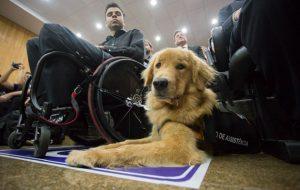 Inclusão de pessoas com deficiência é tema de eventos em São Paulo