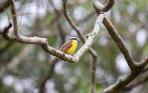 No 'Big Day', Parque Ecológico do Tietê vira grande observatório de aves