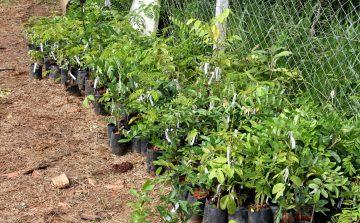 Nascentes avança em Jundiaí com plantio de 70 mil mudas