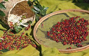 Instituto Agronômico firma acordo na área de agricultura de precisão