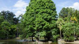 Instituto Florestal