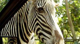 Parque Zoo Safári