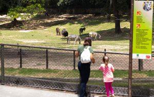 Zoo celebra 61 anos com entrada gratuita para aniversariantes de março