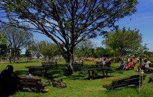 Parque Villa-Lobos, na capital paulista, celebra o 31º aniversário