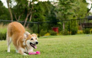Parques urbanos de SP oferecem Espaço Canino aos visitantes
