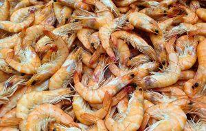 Polícia Ambiental fiscaliza venda ilegal de pescados no período de defeso