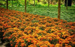 Estado de SP tem destaque na produção de flores e plantas ornamentais
