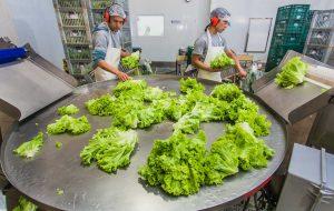 Ferramenta on-line auxiliará em políticas de segurança alimentar