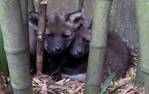 Zoo ganha novos habitantes e faz votação para a escolha dos nomes