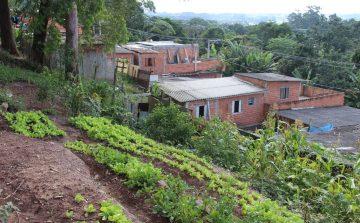 Agricultura dá dicas de proteção sustentável para hortas urbanas