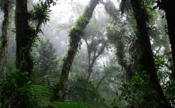 Estado de SP se empenha na implementação do Código Florestal