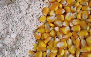AgriFutura: tecnologias de produção voltadas ao agricultor paulista