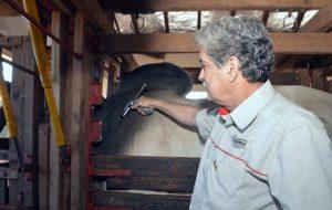 SP promove campanha de vacinação contra a febre aftosa neste mês