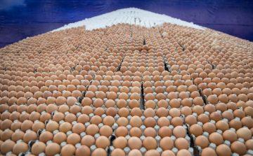 Bastos é maior produtora de ovos do Estado de SP