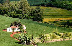 Instituto de Economia Agrícola desenvolve app para Agricultura