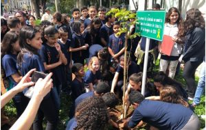 Movimento Paulista planta árvores em homenagem às vítimas de acidentes de trânsito