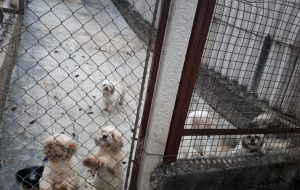 Polícia Militar Ambiental interdita canil com cerca de mil animais