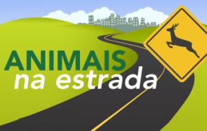 Atenção: saiba como proceder ao avistar animais na estrada