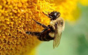 Exposição do Instituto Biológico mostra importância dos insetos