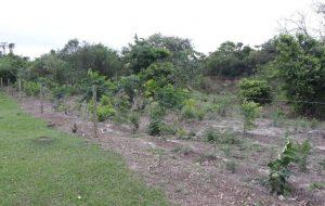Programa Nascentes recupera área em assentamento em Presidente Bernardes