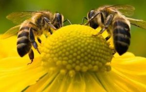 Etec Andradina cria iniciativa para difundir criação de abelhas sem ferrão