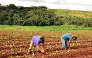 Secretaria de Agricultura libera R$ 25 milhões para subvenção do Seguro Rural