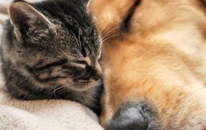 Poupatempo Mauá promove feira de doação de animais na sexta-feira (27)