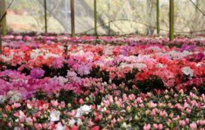 Pesquisas com apoio da Fapesp desvendam mecanismo de fertilização das plantas
