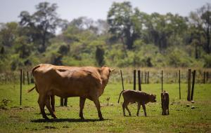 SP quer vacinar 4,5 milhões de animais contra febre aftosa em novembro