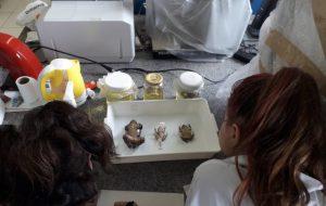 Garotas do Ensino Médio podem participar de atividades com cientistas na USP