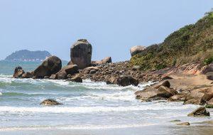 Fundação Florestal faz parceria com associação para monitoria ambiental em Cananéia
