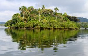Fundação Florestal celebra 34 anos de conservação e proteção à natureza