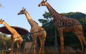 Zoológico de São Paulo apresenta programação especial de Natal