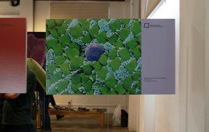 Instituto Butantan sedia exposição com fotos ampliadas do universo microscópico