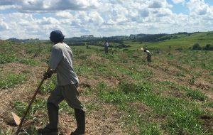 DAEE planta 90 mil mudas em torno da barragem de Pedreira