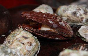 Secretaria de Agricultura é pioneira em pesquisas com produção de moluscos marinhos