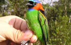 Aves do Parque Estadual Serra do Mar têm destaque em publicação internacional