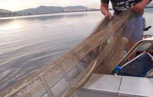 Estado monitora e apoia a cadeia do pescado em tempos de COVID-19
