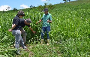 Estado auxilia no desenvolvimento de técnica de plantio em áreas montanhosas