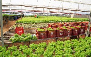 Para manter abastecimento, Itesp prioriza trabalho essencial dos produtores rurais