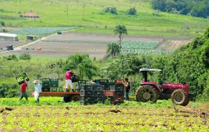 Estudantes da Fatec Mogi das Cruzes criam Agrofeira Delivery