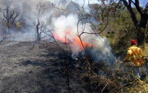 Debate online analisa os impactos das queimadas na qualidade do meio ambiente