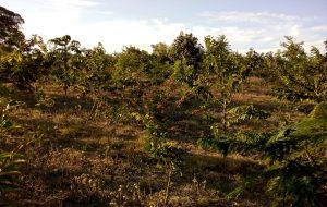 Ativo Verde é mais um instrumento para restauração ecológica do Programa Nascentes