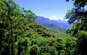 Unesp: Livro aborda importância do planejamento ambiental no meio rural