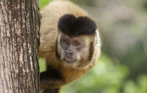 Comissão Pró-Primatas apresenta nova composição em São Paulo
