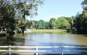 Infraestrutura e Meio Ambiente apresenta reorganização do Sistema Estadual de Florestas