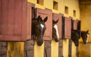 Videoconferência debate protocolo sanitário unificado para equinos e bovinos em SP