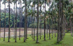 Fundação Florestal realiza ações de manejo em área do município de Rio Claro