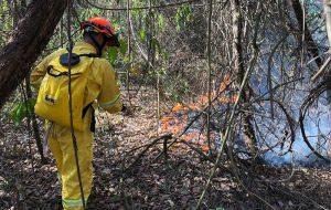 Governo de São Paulo mobiliza esforços no combate às queimadas no estado