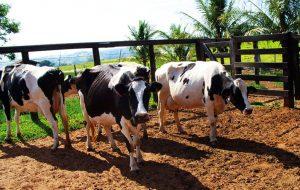Secretaria de Agricultura promove difusão de conhecimento sobre qualidade do leite